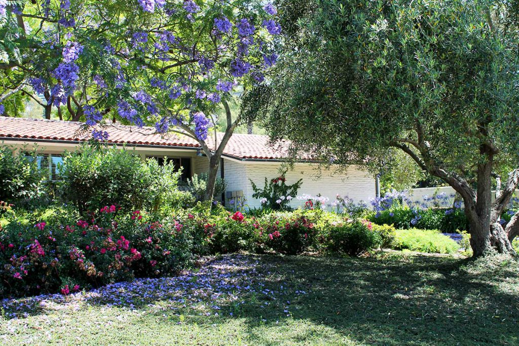 Front landscaping with Jacaranda trees at Wood Glen Hall Assisted Living in Santa Barbara