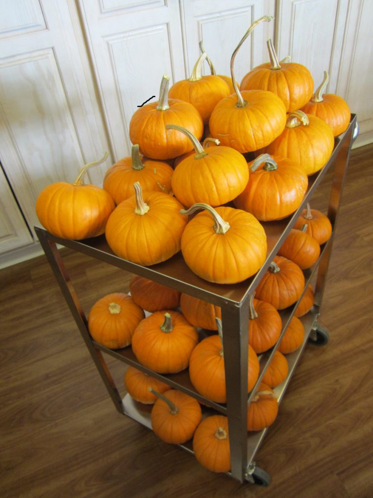 pumpkins on a cart for assisted living center
