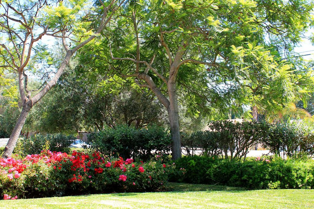 The view from the front entrance at Wood Glen Hall Assisted Living in Santa Barbara